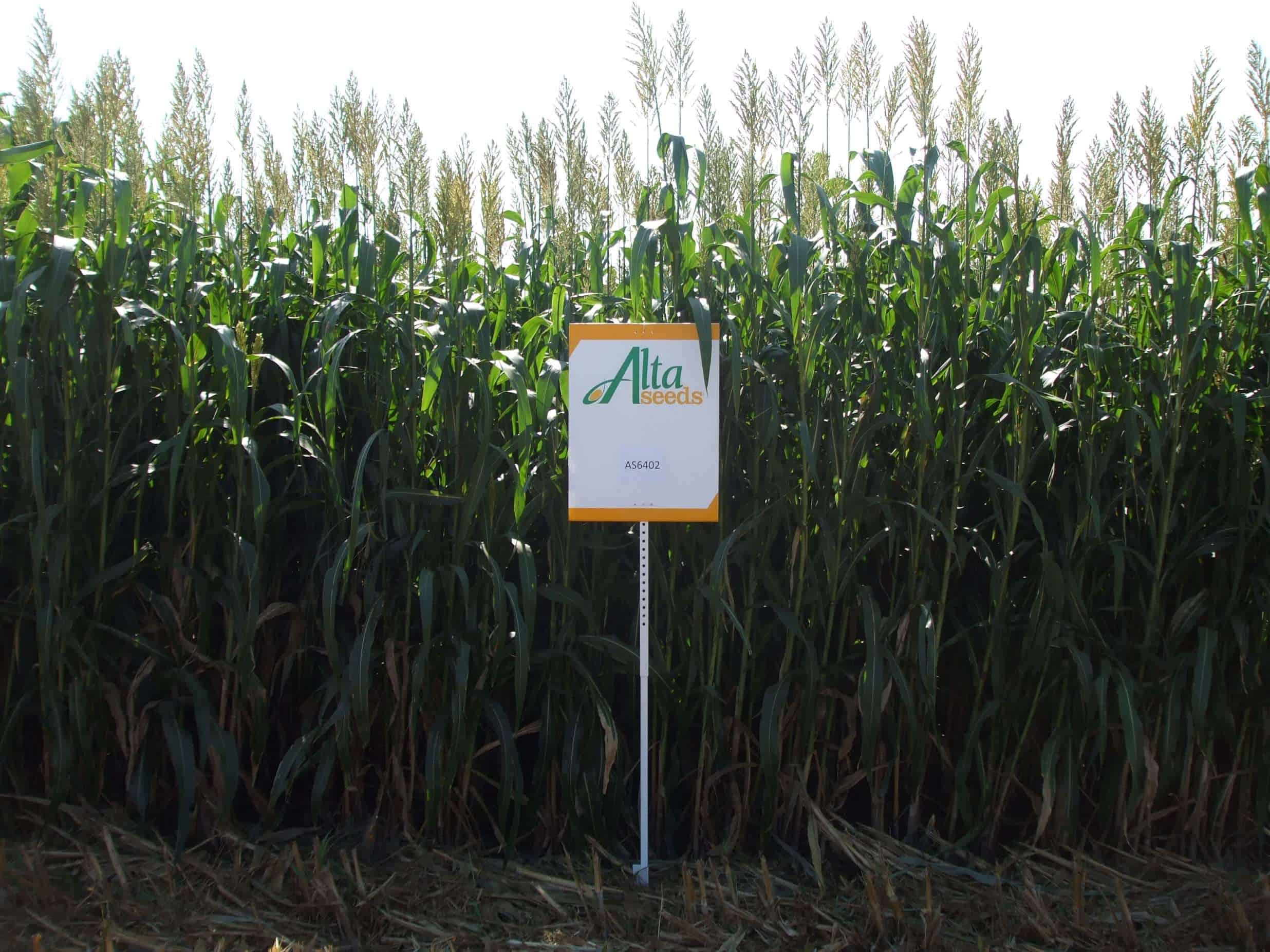 Sign next to seed crops
