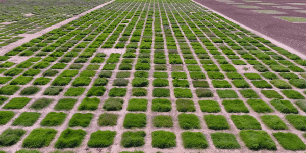 aerial view of plots of greenery