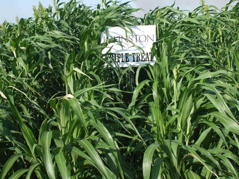 Sign next to Triple Threat crops
