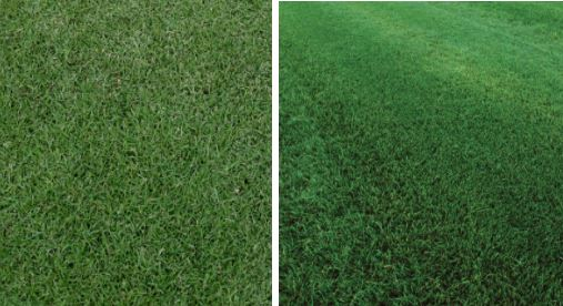 Grass comparisons
